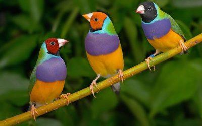 Bir Taşta 3 Kuş: Tekrarlı Tahsilat + E-Fatura + Ön Muhasebe